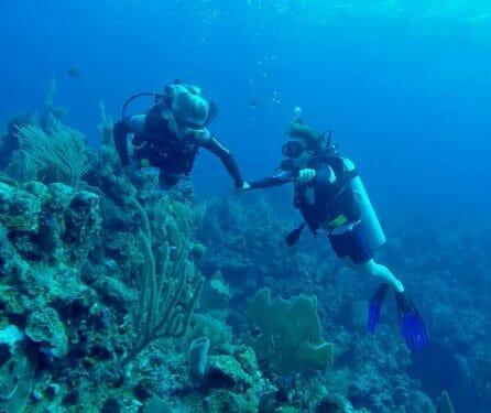 activities-diving Hotel Roatan Posada Orquideas